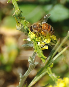 bees_up_close_07242010-014