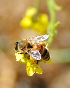 bees_up_close_07242010-009