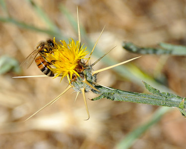 bees_up_close_07242010-007