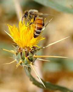 bees_up_close_07242010-005