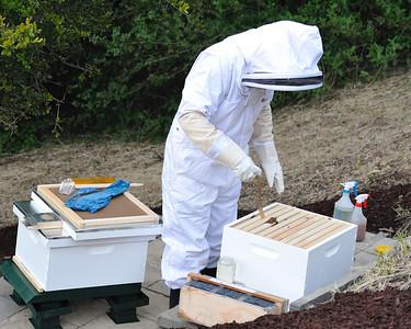 Bees_Pkg_Install_04302010-015