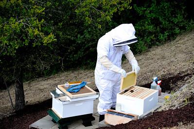 Bees_Pkg_Install_04302010-014