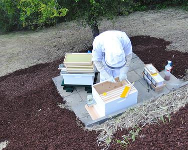Bees_Pkg_Install_04302010-004