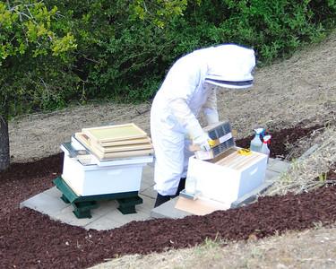 Bees_Pkg_Install_04302010-007