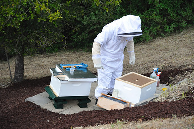 Bees_Pkg_Install_04302010-017