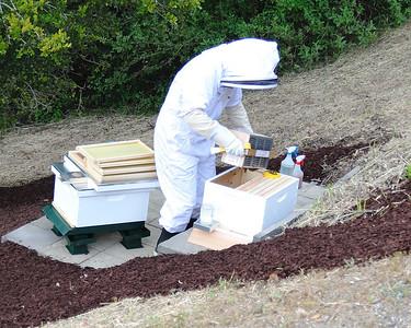 Bees_Pkg_Install_04302010-008