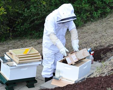 Bees_Pkg_Install_04302010-011