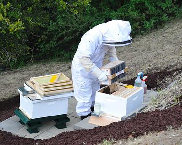 Bees_Pkg_Install_04302010-012
