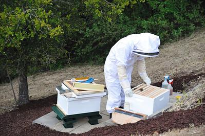 Bees_Pkg_Install_04302010-013