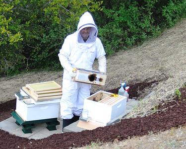Bees_Pkg_Install_04302010-010