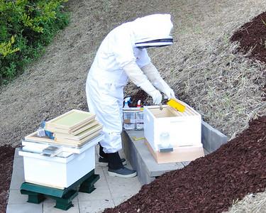 Bees_Pkg_Install_04302010-003
