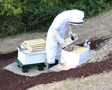 Bees_Pkg_Install_04302010-009