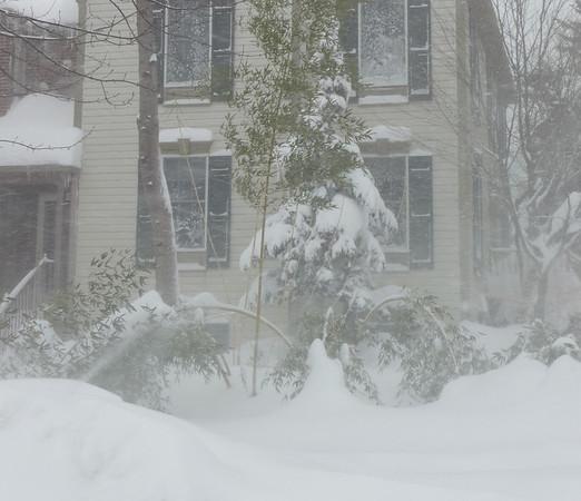 Blizzard Feb 10, 2010