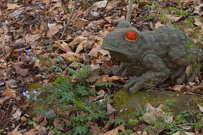 New fantasy garden frog