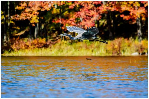 South Frontenac, - Oct 18, 2017 -    at  Big Salmon Lake, ON. (Photo by Ian Dixon/ BMD Photos)