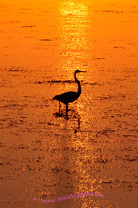 Sunrise at Lake Erie Metro Park, Blue Heron