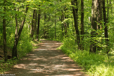 Path Blue Hills Reservation, Milton, MA