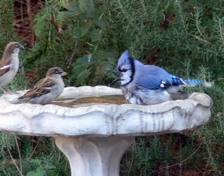 Gossipping around The water cooler.