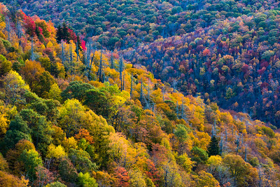 Rolling Hills and Trees on the Blue Ridge Parkway
