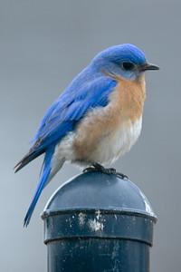 2015 Bluebird 2-25 6