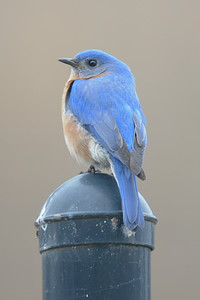 2015 Bluebird 2-25 2