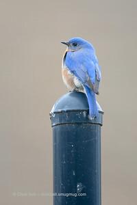 2015 Bluebird 2-25 3