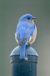2015 Bluebird 2-25 4
