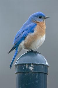 2015 Bluebird 2-25 5