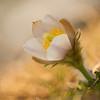 Frühling .....
