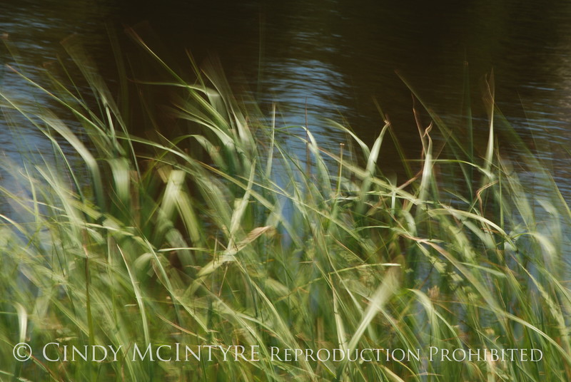 Blurry Grasses (22)