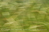 Blurry Grasses (6)