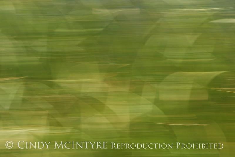 Blurry Grasses (7)