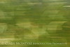 Blurry Grasses (7)