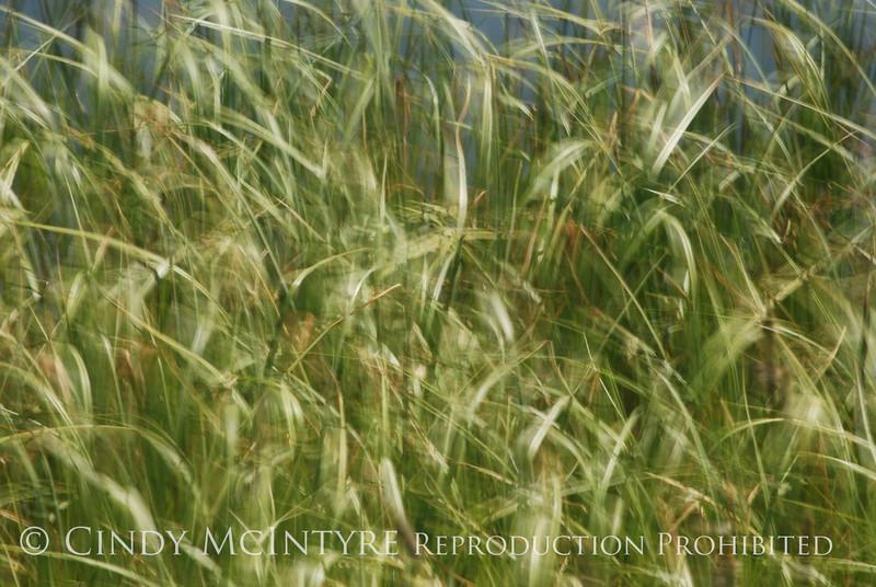 Blurry Grasses (12)