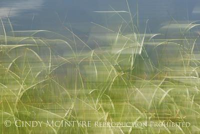 Blurry Grasses