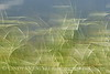 Blurry Grasses (3)