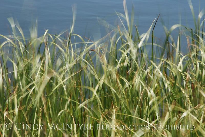 Blurry Grasses (14)