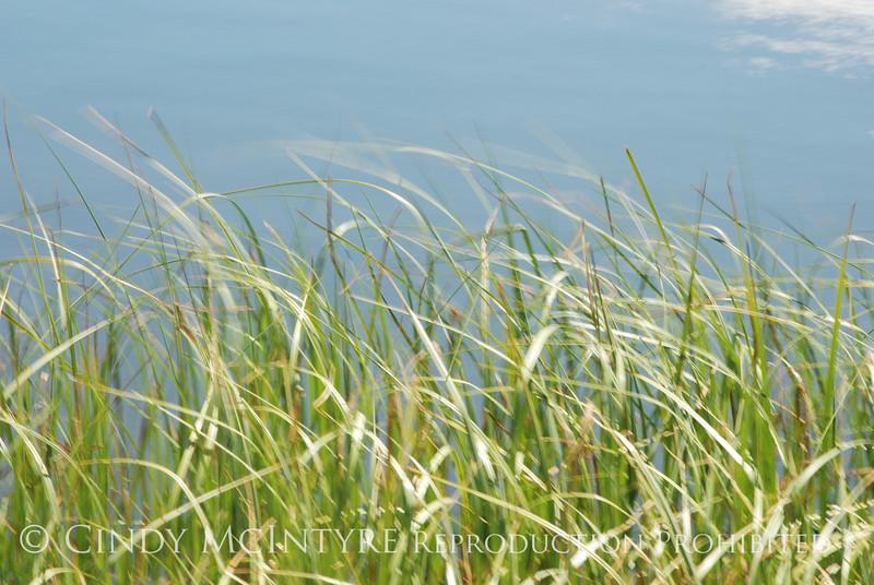 Blurry Grasses (11)