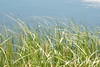 Blurry Grasses (11)