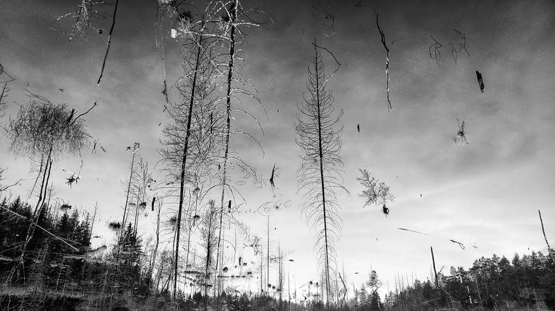 Bogesund träsk, Vaxholm - Sweden