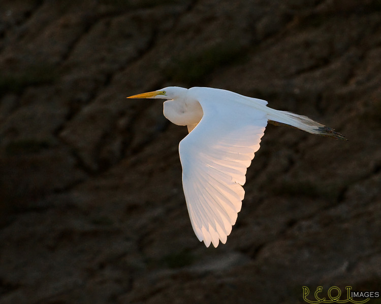Egret 4309