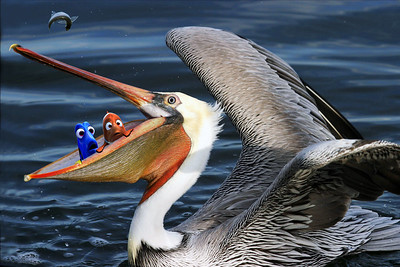 If you've seen the movie Finding Nemo, then you'll recognize those two characters in the pelican's mouth.