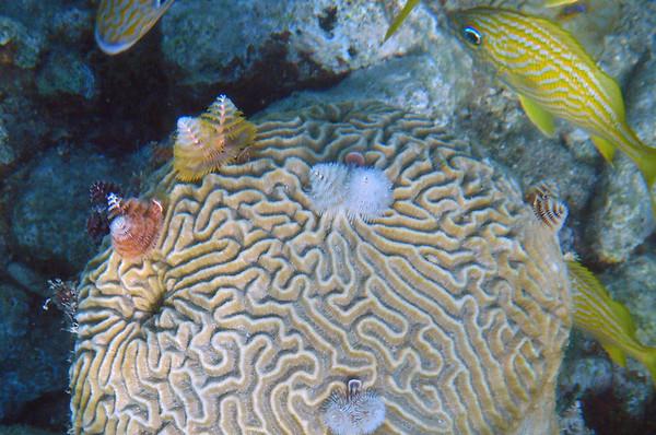 Bonaire (Dutch Caribbean) _Sept-2010