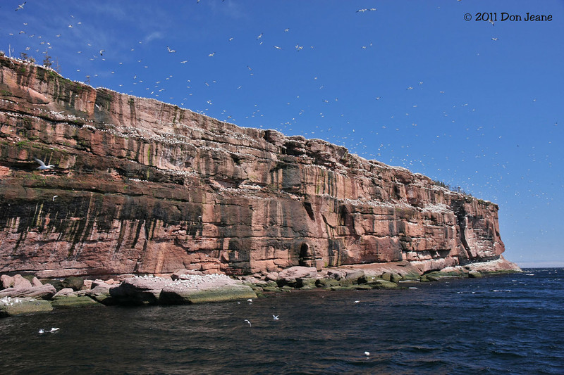 Bonaventure Island, QC Northern Gannet and seabird colonies.