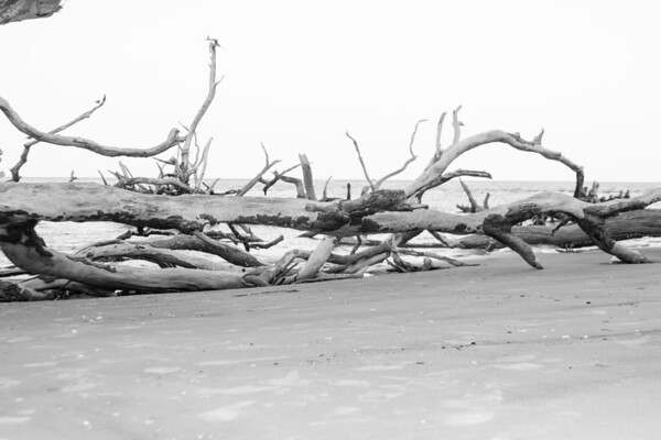 Boneyard Beach, Big Talbot Island