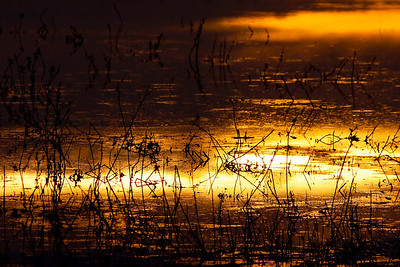 Liquid sunrise over the Bosque del Apache National Wildlife Refuge in New Mexico.