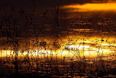 Liquid sunrise over the Bosque del Apache National Wildlife Refuge in New Mexico.