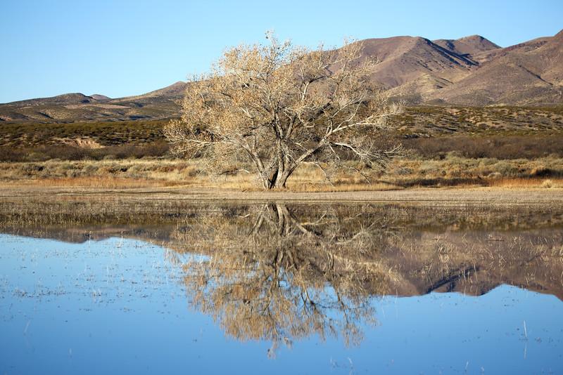 Bosque del Apache in reflection