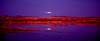 Moonrise over the Bosque del Apache