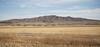Bosque del Apache field